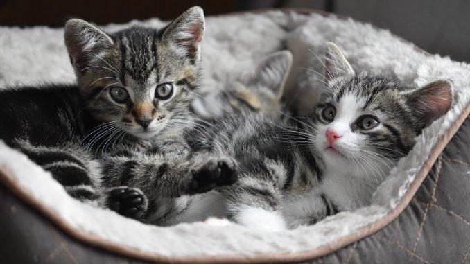 panier pour chatons
